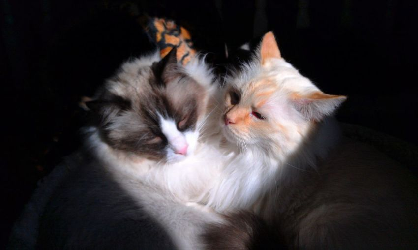 Close-up of cats lying on bed