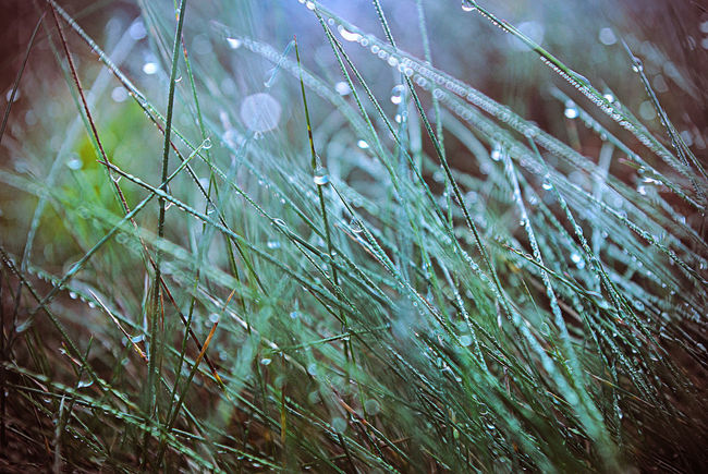 Beauty In Nature Blade Of Grass Close-up Day Drop Fragility Freshness Grass Green Color Growth Nature No People Plant RainDrop Selective Focus Tranquility Wet