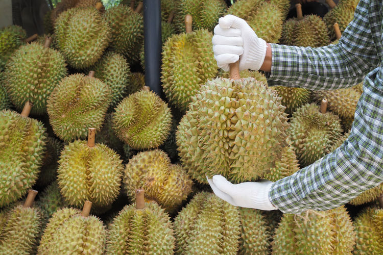 Cropped hands holding durian in market