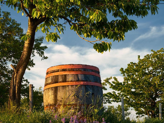 Wine cask amidst trees on field against cloudy sky