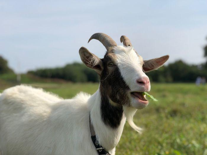 GOLD RING Suzdal Animal Themes Animal Mammal Domestic Animals Vertebrate Pets One Animal My Best Travel Photo