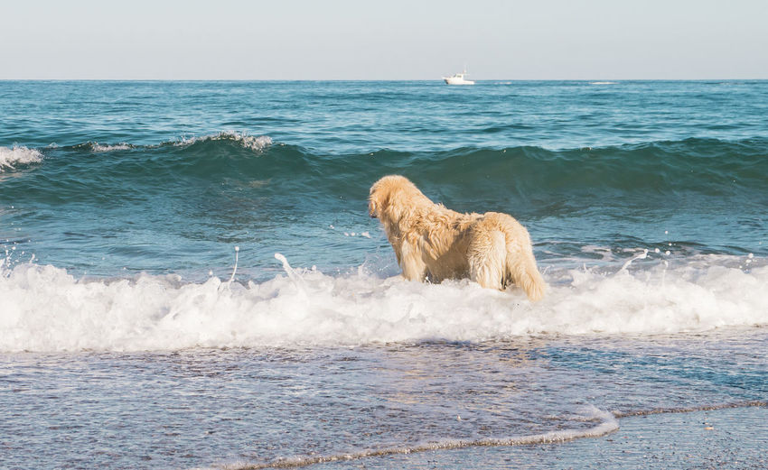 Animal Themes Beach Beauty In Nature Day Dog Domestic Animals Horizon Over Water Minimalism Nature No People One Animal Outdoors Pets Relax Relaxing Sea Swimming Tranquil Scene Water Wave Live For The Story Sommergefühle