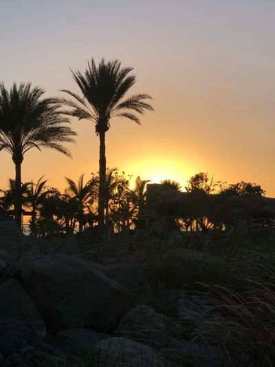 Anfi Del Mar Sunset Sky Tree Plant Sunset Growth Beauty In Nature Scenics - Nature Nature