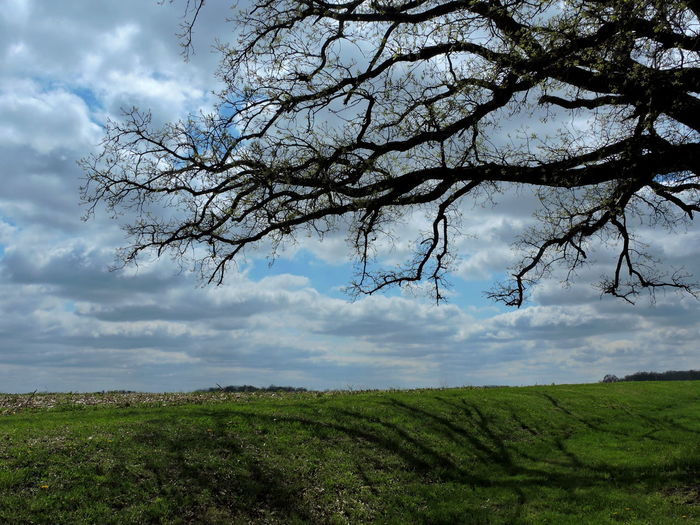Landscapes Branch Silhouette Blue Sky And White Clouds Tree Plant Landscape Cloud - Sky Tranquil Scene Sky Tranquility Environment Beauty In Nature Scenics - Nature Growth Nature Green Color No People Field Land Day Non-urban Scene Branch Outdoors