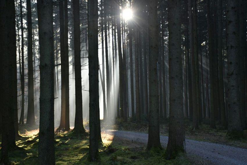Wood Walk Sunlight Through Trees Sunshine ☀ Cold Winter ❄⛄ Outdoors
