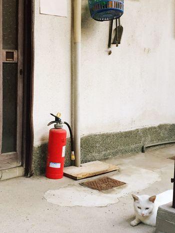 生きる 日常 Life Force Nostalgie House Door Traffic Cone Cat
