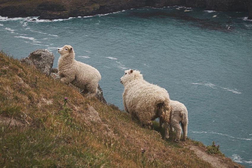 New Zealand Paua Bay Farmlife Travel Photography Nature Sheeps Sheperd