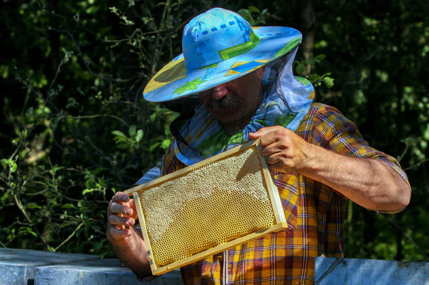 Agriculture Apiary APIculture Bee Beehive Beehives Beekeeper Beekeeper's Hat Beekeeper, Honey Day Food Forest Forest Ape Nature Occupation One Man Only One Person Outdoors Real People Standing Working
