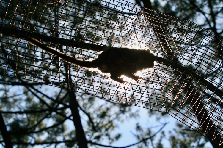 Primate on the air Primate Monkey Low Angle View Tree Built Structure Architecture No People Nature Plant Metal Sunlight