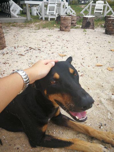 Baancivilize Resort Beach Khanom Dog Friendly