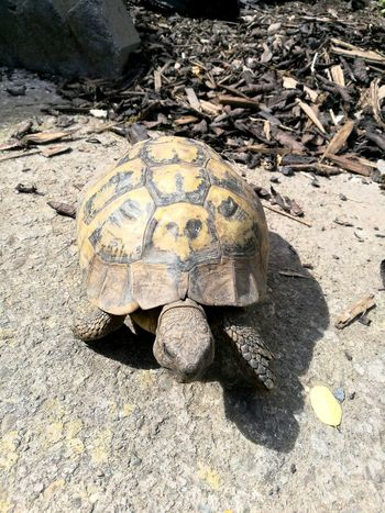 Sand Beach Animal Wildlife Animals In The Wild Nature Animal Themes One Animal Tortoise Sea Life Outdoors Day Reptile No People Sea Sunlight Tortoise Shell Close-up Sea Turtle Beauty In Nature UnderSea