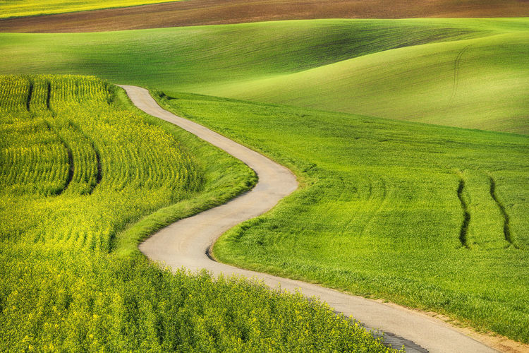 Scenic view of grassy hill
