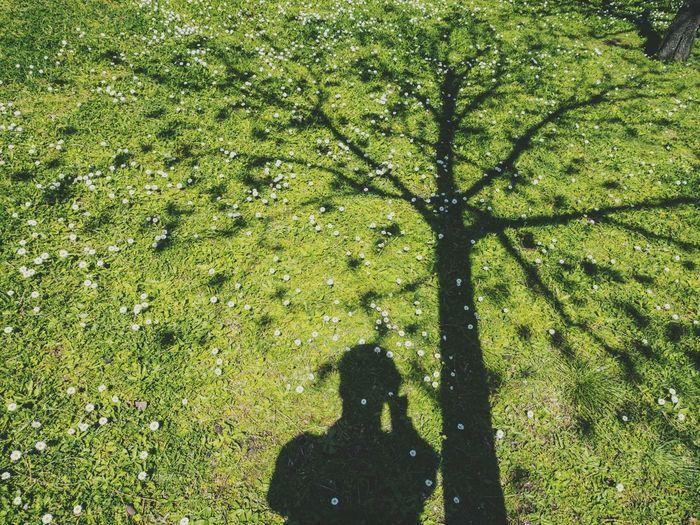 Relaxing Spring Shadow Tree Selfie Star Flower Grass