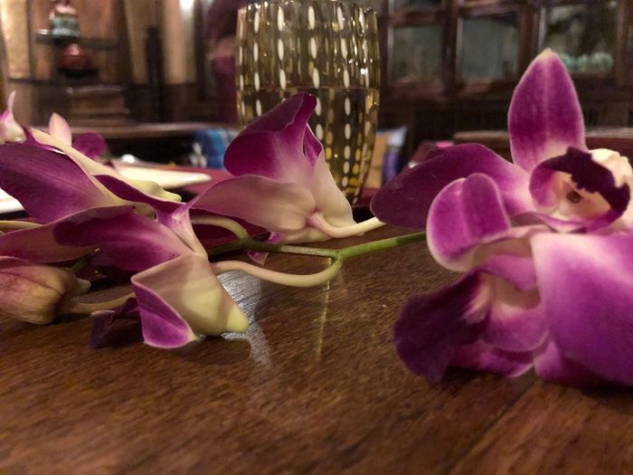 Flowering Plant Flower Plant Freshness Petal Vulnerability  Fragility Indoors  Beauty In Nature No People Close-up Pink Color Nature Flower Head Inflorescence Growth Orchid Focus On Foreground Decoration Table