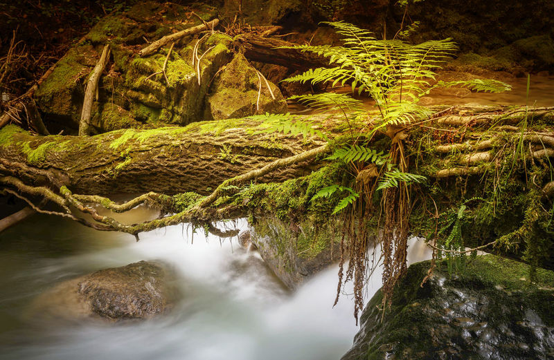 Farn Beauty In Nature Flowing Flowing Water Forest Land Long Exposure Moss Nature No People Non-urban Scene Outdoors Plant Rainforest River Rock Rock - Object Scenics - Nature Solid Tranquil Scene Tranquility Tree Water Waterfall