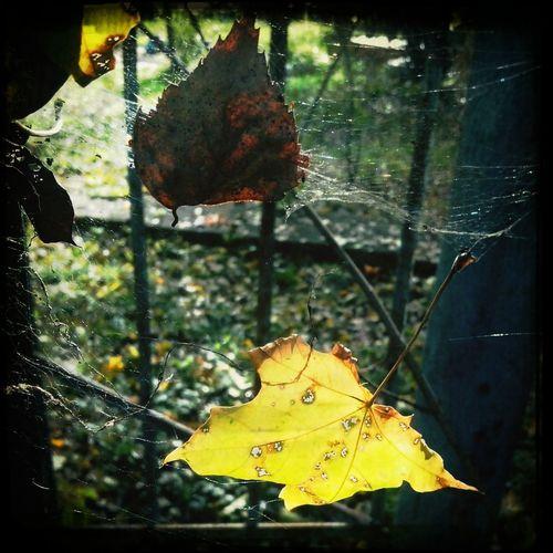 Colors Of Autumn Autumn Fall