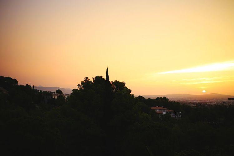 SPAIN Sunrise Sunset Sky Tree Silhouette Orange Color Scenics - Nature Plant