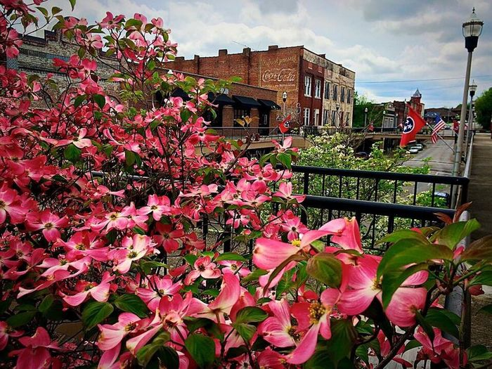Flower Built Structure Architecture Building Exterior Nature Sky Plant City Fragility Outdoors Beauty In Nature No People Day Freshness Morristown Tn