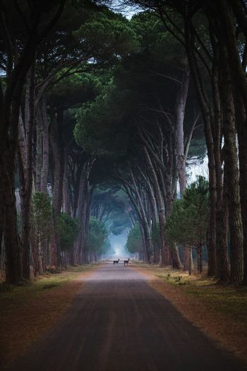 Mornings in Italy Sunrise Deer Nature Landscape Italy Tree Transportation Plant Road The Way Forward Direction Nature Mode Of Transportation Tunnel Beauty In Nature Travel Outdoors No People Arch Forest