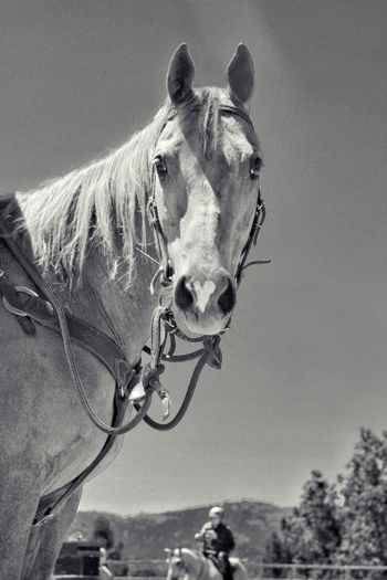 Horse One Animal Domestic Animals Outdoors Close-up Ranch Life Horseback Riding Horse Life Random Acts Of Photography Animal Themes My Hobby Summertime