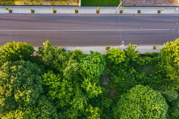 Directly above shot of trees by empty road