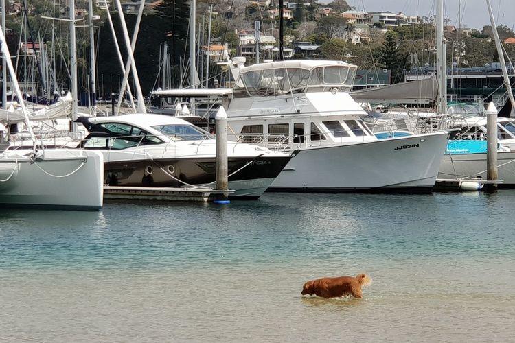 Fishing : ) Dog Waterviews Water Nautical Vessel Sea