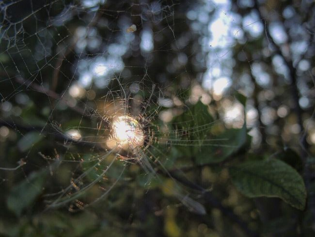 Spider Web Close-up Spider Focus On Foreground Nature Natural Pattern Zoology Selective Focus Day Lens Flare Spiderweb Beauty In Nature Sun Complexity Intricacy паутина ловецсолнца