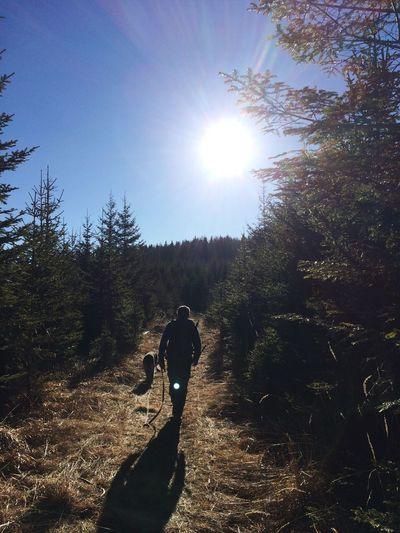 Heaven on 🌎 Dog Outdoors Forest Fairytale  Germanshepherd AWalkInTheWoods Nature