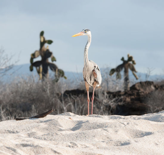Heron perching on sand against sky