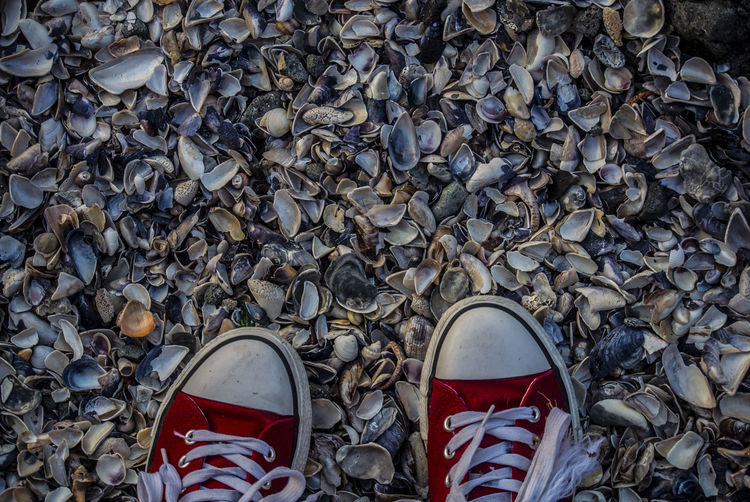 Directly above shot of shoes on seashells at beach