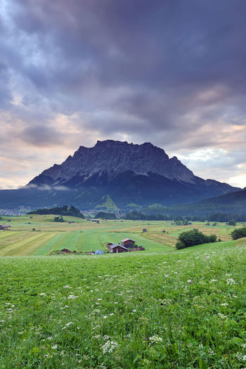 Summer of very large farm with the village and Mt. Zugspitze on the sunrise with fog , Ehrwald, Wetterstein mountain range at Biberwier, Tyrol, Austria Sky Scenics - Nature Cloud - Sky Environment Landscape Mountain Land Beauty In Nature Field Tranquil Scene Grass Plant Tranquility Nature Green Color No People Rural Scene Mountain Range Non-urban Scene Outdoors Alps Europe Austria