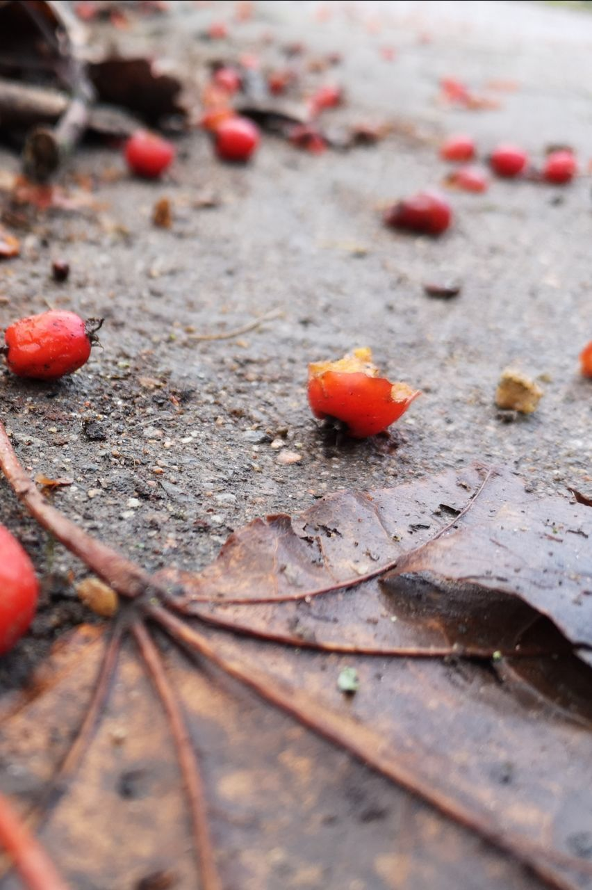 day, no people, food, close-up, fruit, food and drink, selective focus, wood - material, leaf, plant part, nature, outdoors, orange color, healthy eating, autumn, high angle view, freshness, red, beauty in nature, dry, leaves