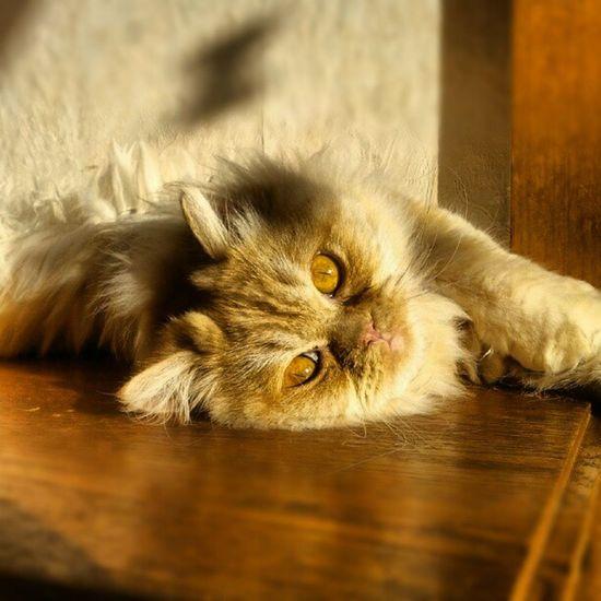#good #morning #cutie-pie. #you #enjoy the #sun. Don't #you? #cat #citty #katze #kitty #augen #cute #süß #Morgen #sonne #aufgang #schlafen #chillen #chill #sleepy #miau Cutie Miau Cat Good Sun Augen Chill Sus Morning Citty Chillen Aufgang Sonne Kitty Schlafen Enjoy You Cute Katze Sleepy Morgen