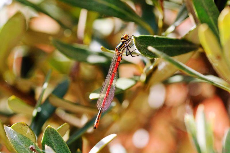 Insekt Natur