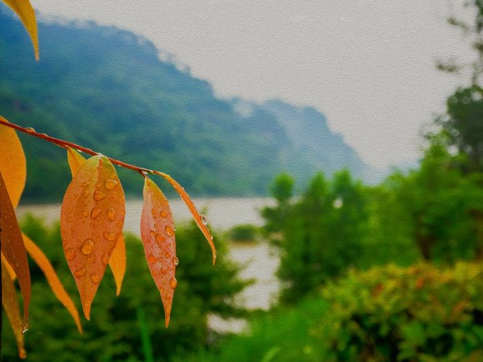 Leaf 🍂 Riverside Nature_collection Walking Around Getting Inspired Taking Photos Enjoying Life The Path Along The River Fresh Air Hello World watet droplets