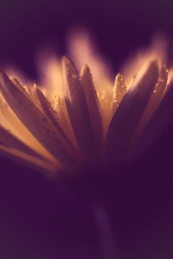 Macro shot of flowering plant