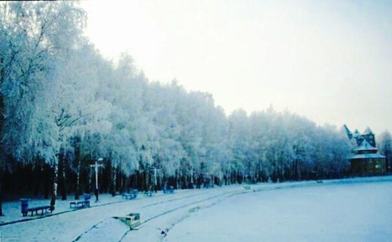 Лес лес и природа снег❄ красота красиво красотище Зимний лес крамивоеместо зима зима❄️ небо⛅️