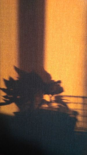Nofilter No Filter Plant Plant Shadow Plant Silhouettes Beauty In Nature Beauty Beautiful Sunset Shadow Silhouette Sunlight Sky Close-up Atmospheric Mood Romantic Sky Focus On Shadow Atmosphere