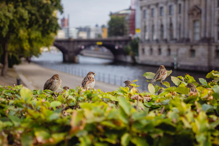 Animal Themes Berlin Bird Birds Building Built Structure City City City Life Cityscape Close-up Colors Day EyeEm Green Color Nature No People Outdoors Plant Street Photography Streetphotography Urban Urban Landscape Walking Around Water