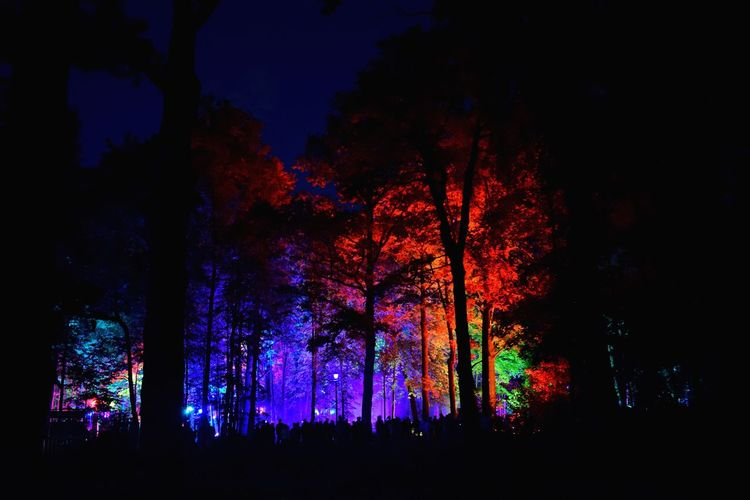 ✨ Inspiration Art Festival ✨ there will be a lot of similar pictures, because, you know, all the trees in the park look similar 😄😄 Tree Night Low Angle View Silhouette Nature Beauty In Nature Tree Trunk Outdoors Night Photography Night Lights Growth Tranquil Scene Scenics Forest Sky Neon Life Nightphotography Art Event Enchanted Forest Bright Light Effect Illuminated Nightlife Park