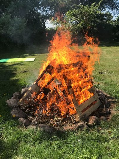 Bonfire Orange Color Glowing Bonfire Firewood Outdoors
