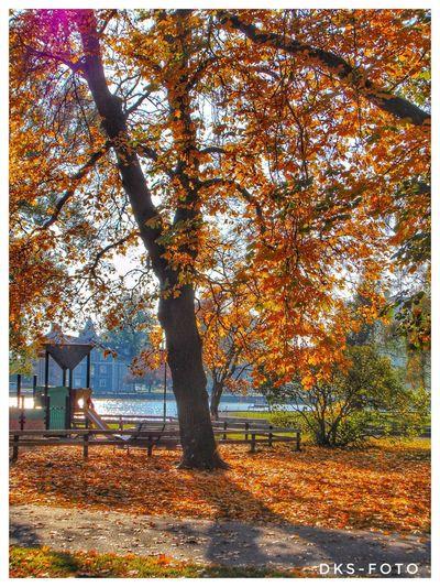 Sweden The True Story Eskilstuna-streetphotography Tree Autumn Sky