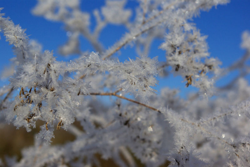 Beauty In Nature Beauty On Our Doorstep Blue Branch Close-up Cold Temperature Day Fragility Frost Frozen Frozen Nature Growth Low Angle View Nature No People Outdoors Plants And Flowers Scenics Art Is Everywhere Snow Tranquility Tree Weather White Color Winter