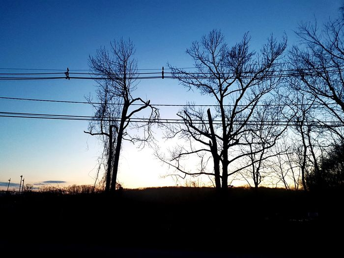 Telephone Line Tree Electricity Pylon Electricity  Technology Cable Silhouette Sunset