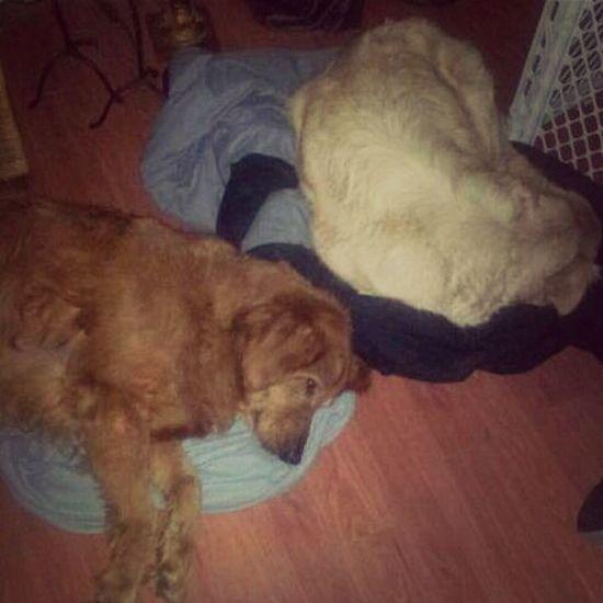 Rusty & Abby