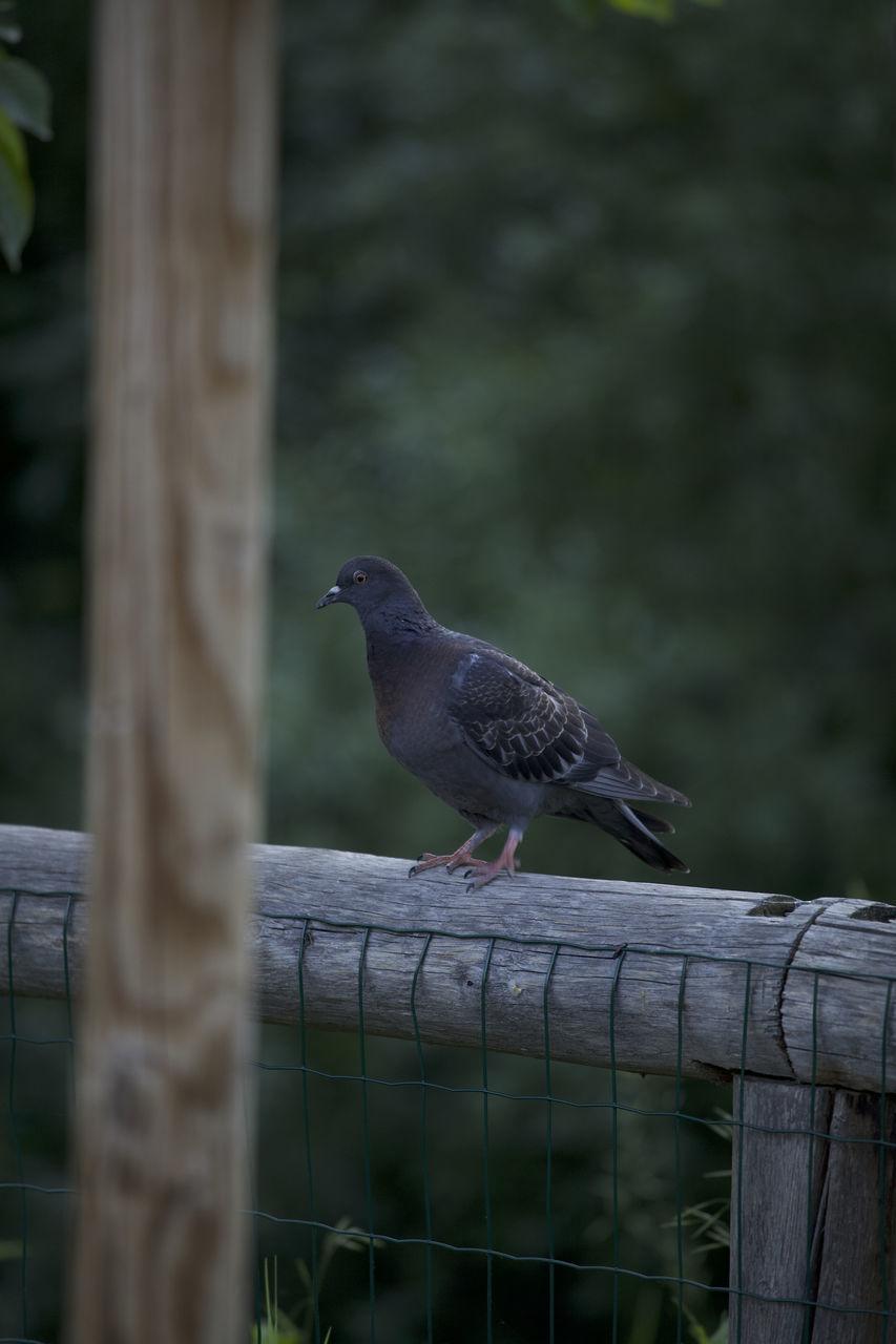 BIRD PERCHING ON WOODEN RAILING