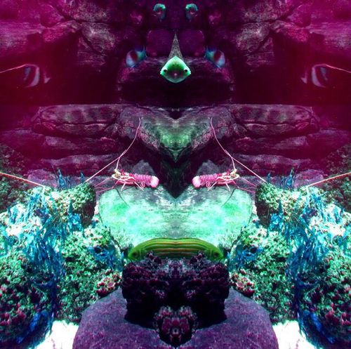 Hello World Fish Psychedelic Sea Life Contemporary Art Photography Trippy Summer Nature Art Student Color Palette Pop Art Check This Out Connected With Nature Underwater Sea London Colorful Digital Art