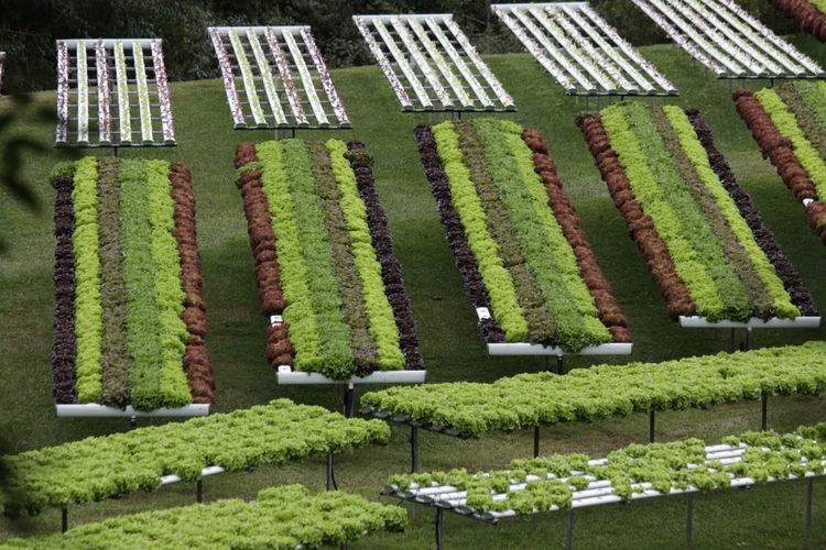 High angle view of flowering plants in field