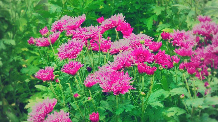 EyeEm Flower Flower Photography Flower Collection Street Photography Taking Photos Warking♡ Hello World Enjoying Life