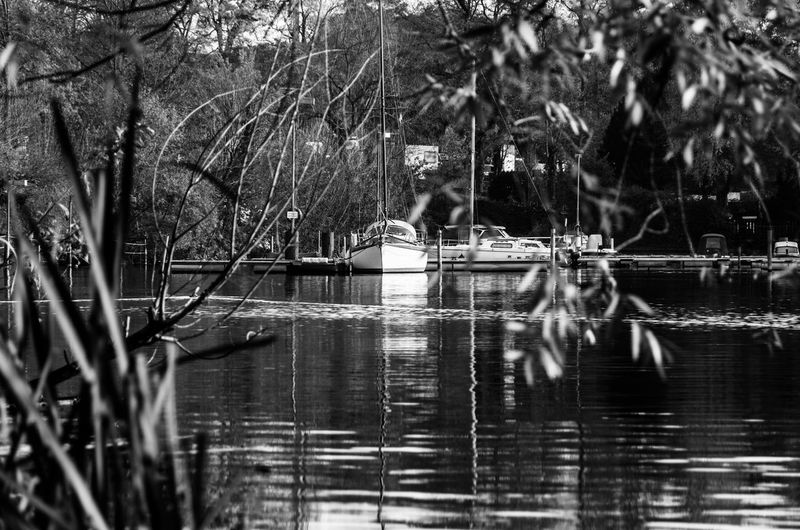 Beautiful Beauty In Nature Blackandwhite Day Nature Outdoors Trees Reflected In The Water Water